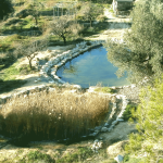 Le bassin aux grenouilles