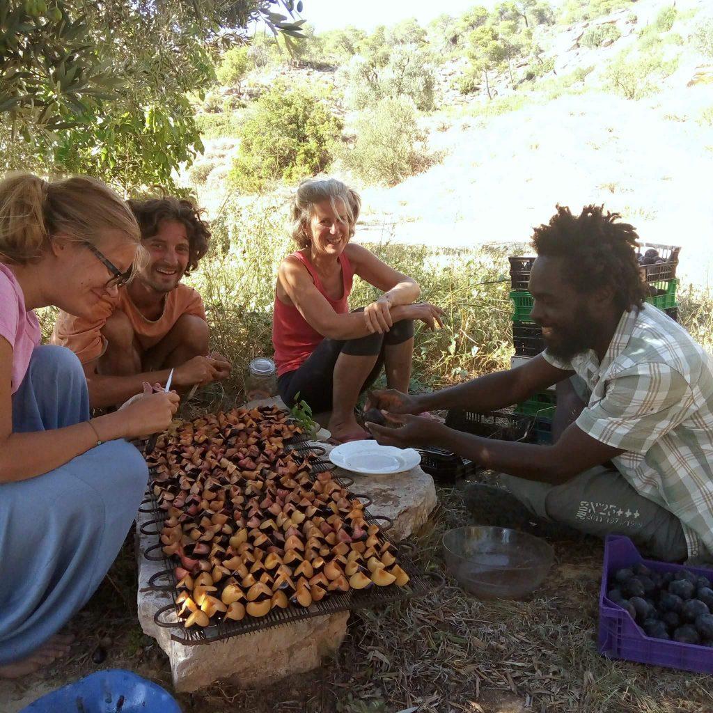 Séchage de figues