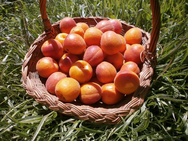 Abricots Flores de Vida