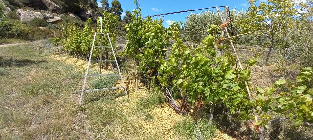 Des treilles et de la vigne un peu partout